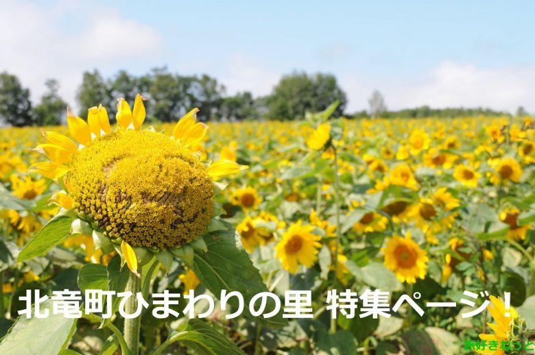 北竜町 夏の風物詩「ひまわり畑」が素敵でした。写真で解説します!