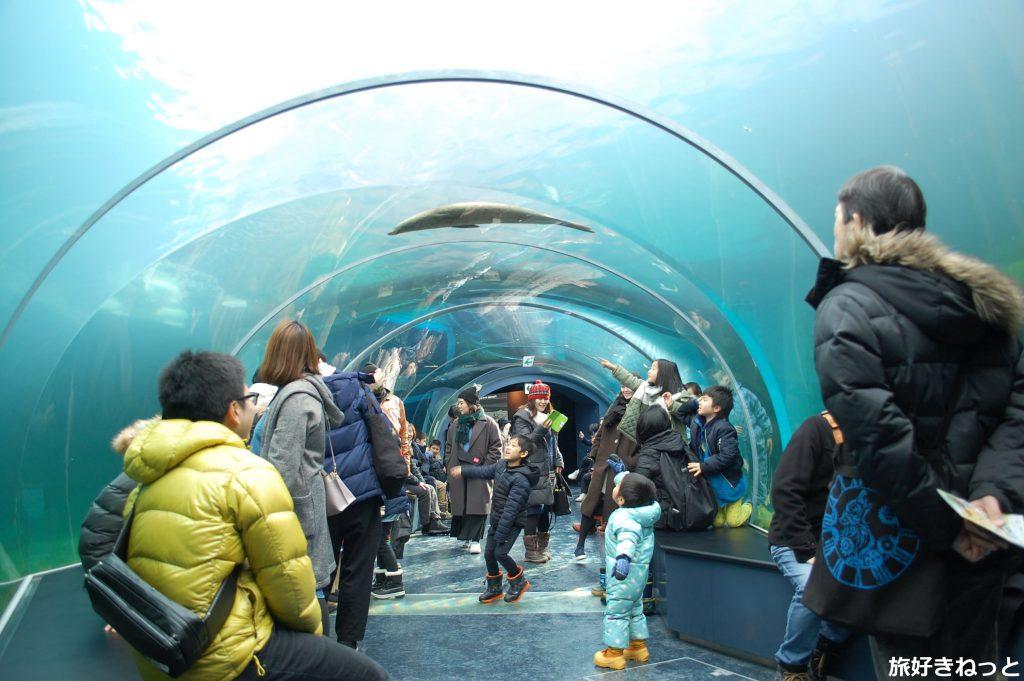 円山動物園は子供から大人まで楽しめる素晴らしい動物園です