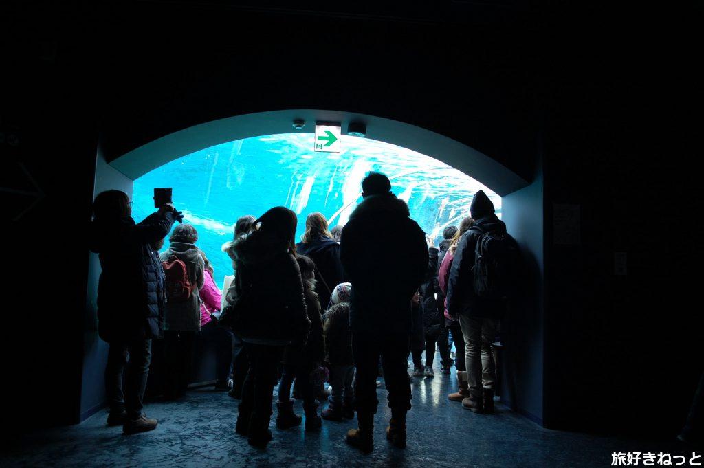 円山動物園のホッキョクグマ・アザラシ館をレポ!写真を見てね♪
