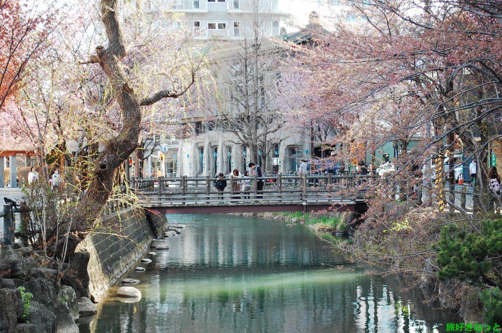 中島公園近く(Zepp札幌)の桜を見てきたよ!