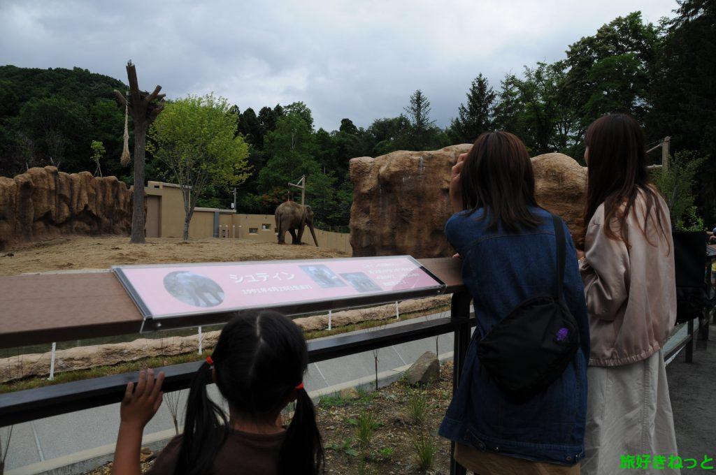 円山動物園「ゾウ舎」屋外展示の『シュティン』が可愛かった!