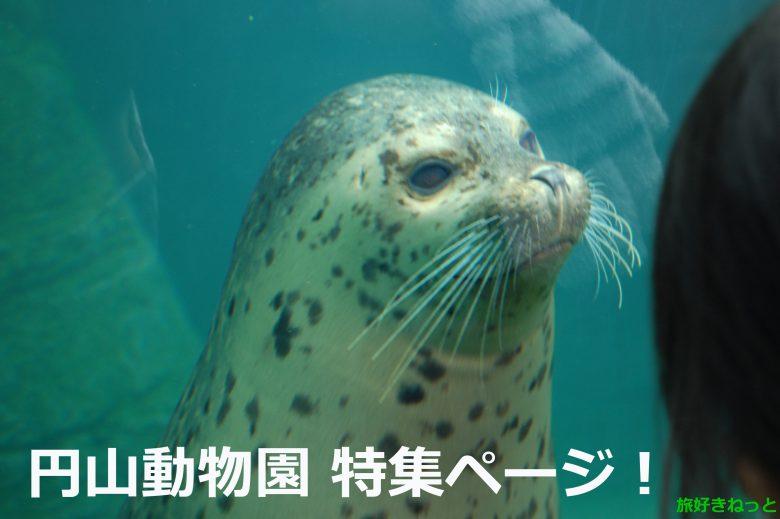 【円山動物園】混雑状況や天気・営業時間・料金・円山動物園の動物たちの写真まとめ