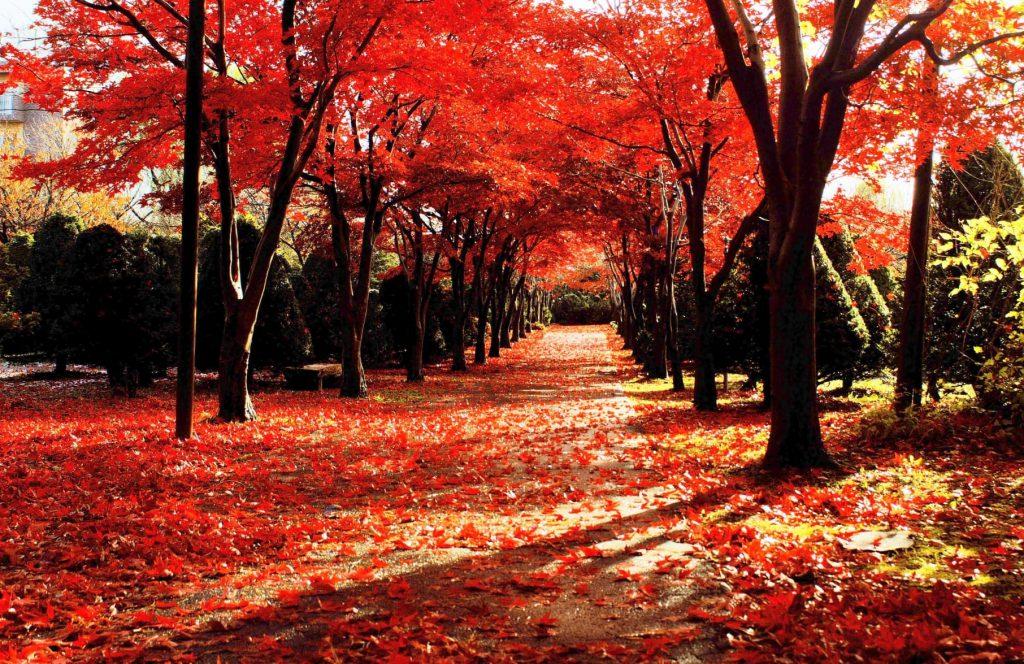 平岡樹芸センター紅葉の見頃は10月中旬~11月上旬※並木道は素敵な撮影スポット
