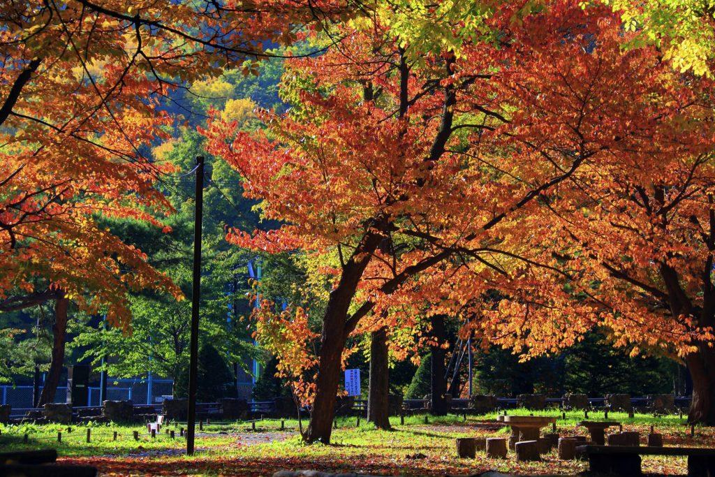 円山公園の紅葉見頃は10月中旬~10月下旬『静かに紅葉狩り』