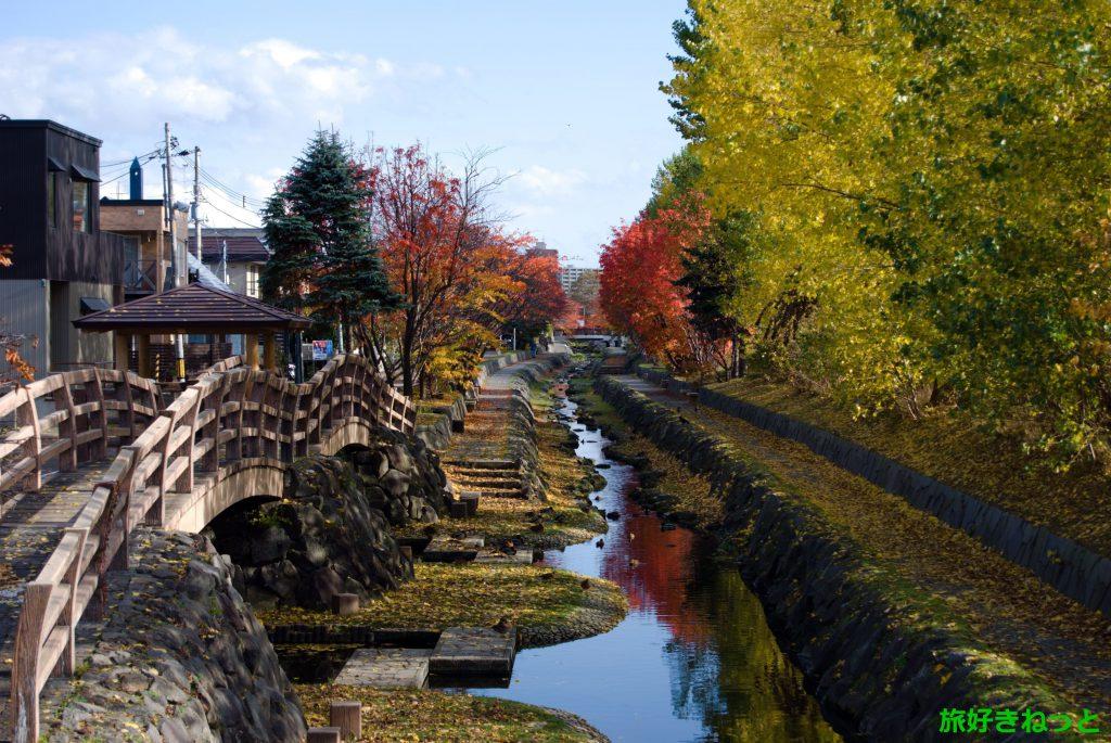 新琴似『安春川の紅葉撮影』秋はカモと紅葉観察を楽しめる