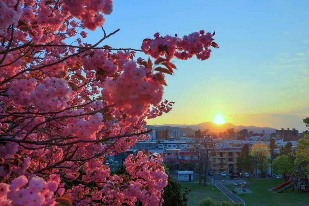 平岸高台公園の桜、と冬、どうでしょうの聖地として観光客が訪れる