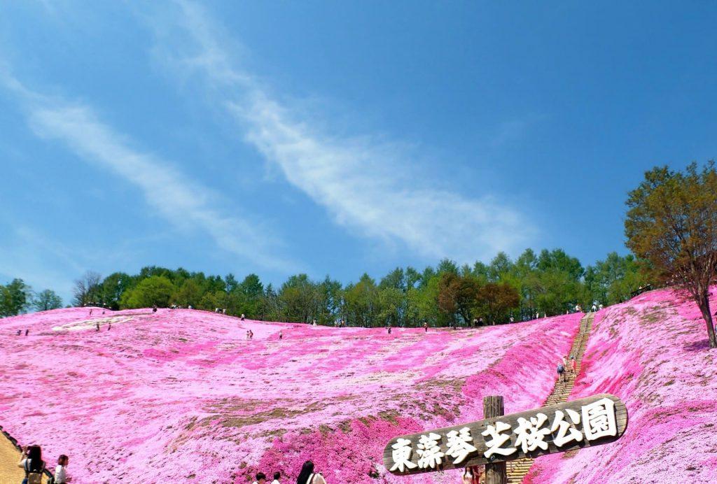 ひがしもこと芝桜公園、ゴーカートや園内遊覧車の乗り物から見る満開の芝桜は最高に楽しい