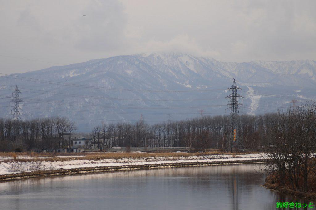 東屯田川遊水地の雪が解けたので野鳥を撮影をしてきた