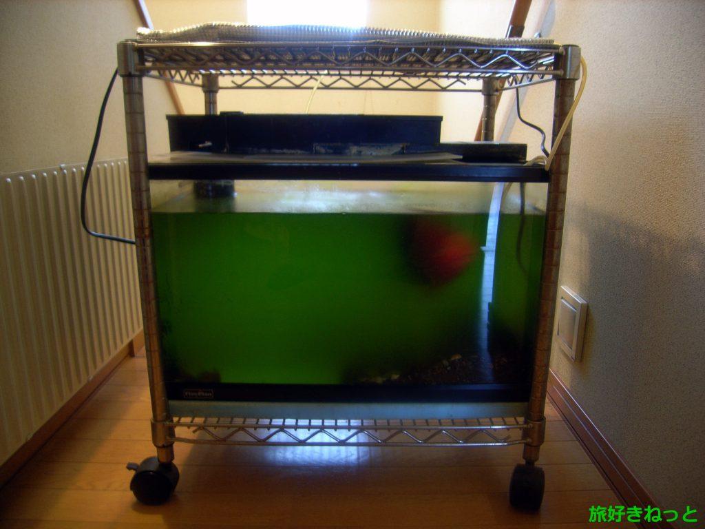 水槽の緑水除去はリセットが一番有効な方法