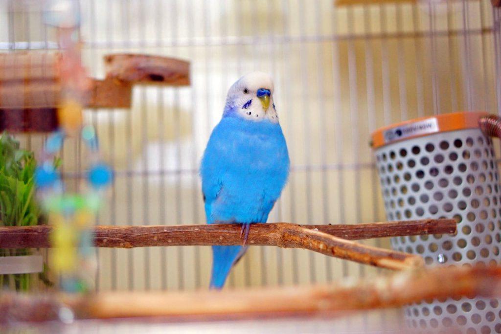 セキセイインコ1羽~2羽飼育するのにおすすめケージ(鳥かご)