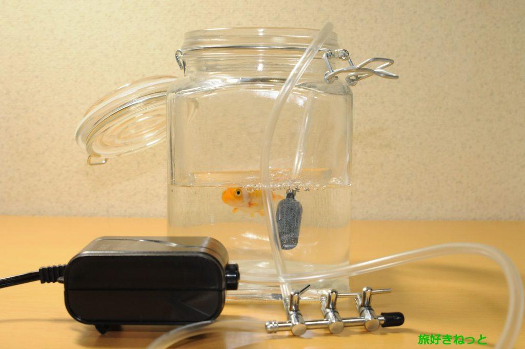 金魚の塩水浴は水1リットルに何グラム?水換えの頻度や水槽に戻す時