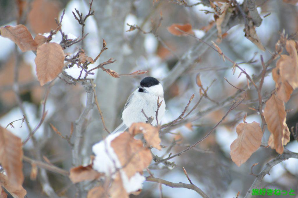 冬の百合が原公園を散歩がてら写真撮影