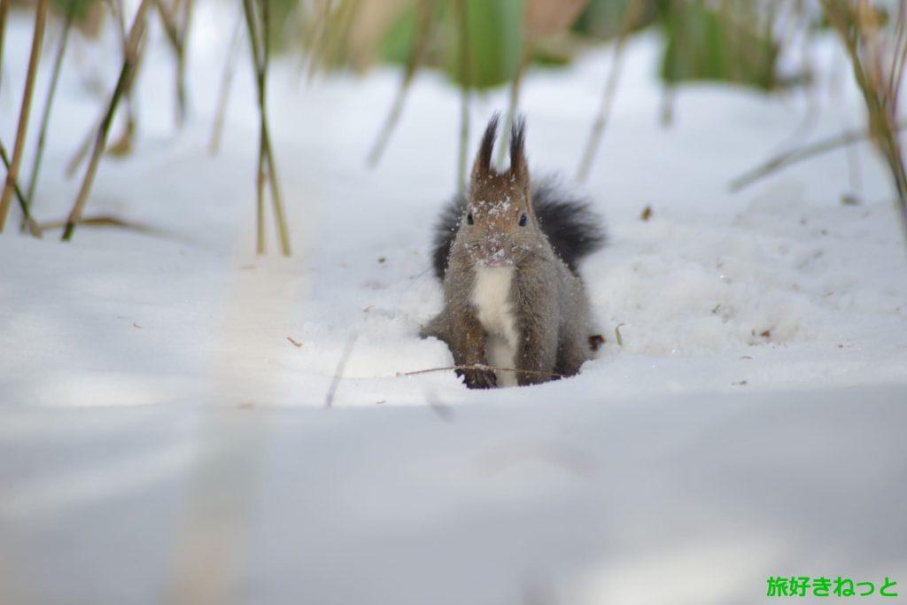 冬の旭山記念公園の楽しみ方、野鳥観察や藻岩山登山をしてきた