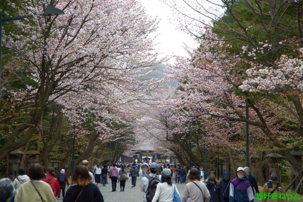 北海道神宮の『桜』撮影