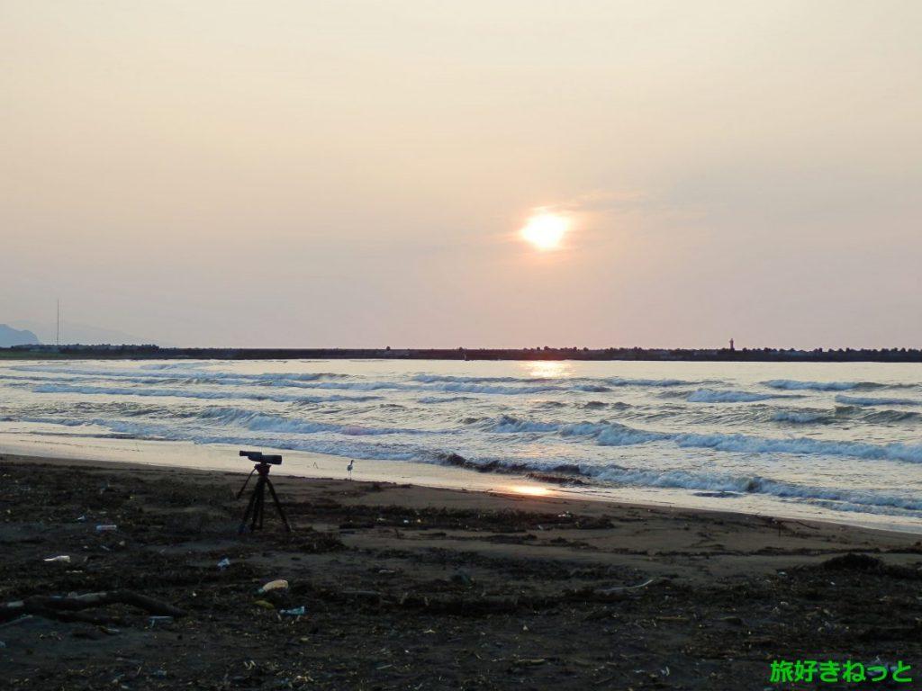 『ソリハシセイタカシギ』の野鳥が石狩東埠頭の砂辺にいたので写真撮影